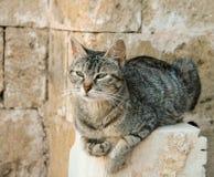 猫在罗希姆诺堡垒 图库摄影