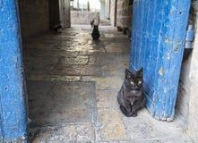 猫在耶路撒冷 免版税库存图片