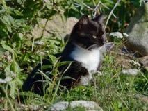 猫在街道上走 库存图片