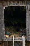 猫在谷仓入口的护理小猫 免版税库存图片