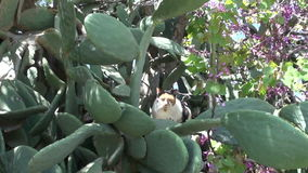 猫在遗弃希腊罗得岛海岛庭院里 股票视频