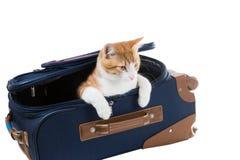 猫在重要的手提箱坐 免版税库存照片