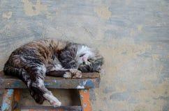 猫在长凳睡觉 免版税库存照片