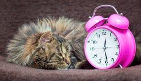 猫在长沙发和神色说谎在时钟 是时间起来,苏醒up_ 免版税库存图片