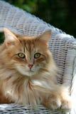 猫在阳光下 免版税库存照片