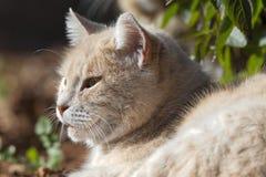 猫在阳光下 免版税图库摄影