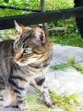 猫在阳光下 库存图片