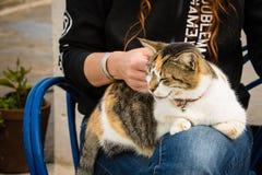 猫在索维拉房子里 库存照片