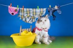 猫在水池的洗涤衣裳 免版税库存图片