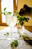 猫在玻璃的嗅柠檬水 库存图片