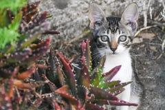 猫在邻里 免版税库存照片