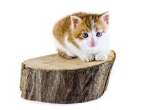 猫坐一块木头 免版税库存图片