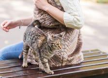 猫坐一条长凳在公园 免版税库存照片