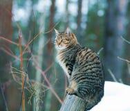 猫坐一根木杆 免版税库存照片