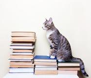 猫坐书 免版税库存图片