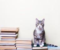 猫坐书 库存照片