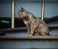 猫坐台阶 免版税库存照片