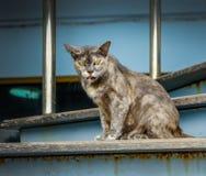 猫坐台阶 库存照片