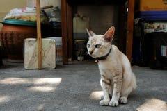 猫坐地板 自行车、拉货车的马和驴仍然是控制的交通工具在古雅小的Mompos,人们有减速的生活 等待某人 库存图片