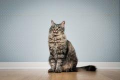 猫坐地板 免版税库存图片