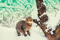 猫坐多雪的结构树 免版税库存图片