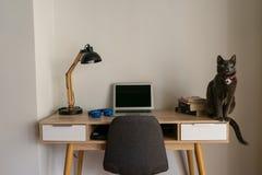猫坐家庭办公室书桌 图库摄影