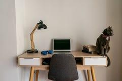 猫坐家庭办公室书桌 免版税库存图片
