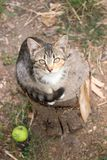 猫坐树桩 土气样式,选择聚焦 免版税库存照片
