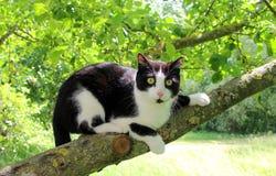 猫坐树 库存照片