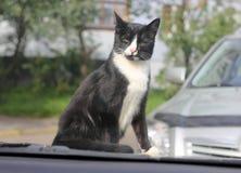 猫坐汽车的敞篷 免版税图库摄影