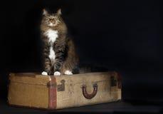 猫坐的葡萄酒手提箱 库存照片