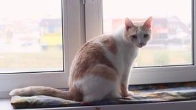 猫坐窗台 股票视频