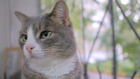 猫坐窗台 股票录像