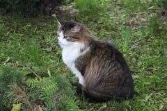 猫坐草 免版税图库摄影