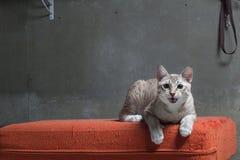 猫坐被抓的橙色织品沙发 免版税图库摄影