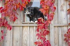 猫坐视窗 免版税库存图片
