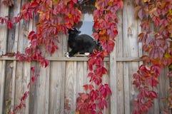 猫坐视窗 库存图片