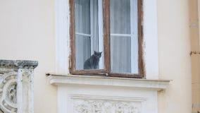猫坐视窗 股票录像