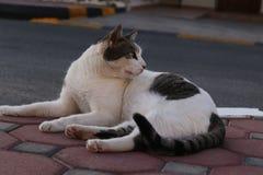 猫基于小径 免版税图库摄影