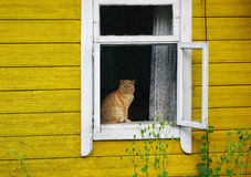 猫基石坐的视窗 库存照片