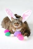 猫复活节彩蛋 免版税库存图片