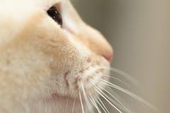 猫外形视图 免版税库存照片