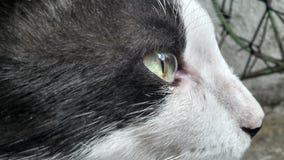 猫外形 免版税图库摄影