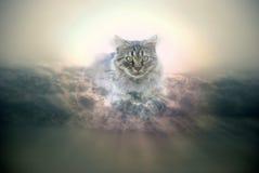 猫天空 免版税库存照片