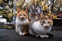 猫夫妇 免版税库存照片