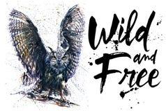 猫头鹰习惯晚睡的人水彩五颜六色的绘画,夜翼,大鸟夜掠食性动物,夜的眼睛国王,夜的 库存照片
