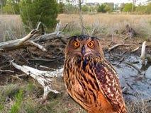 猫头鹰公园状态 库存图片