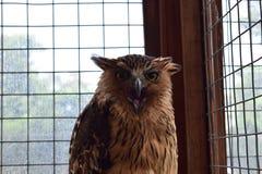 猫头鹰在与笼子的天 图库摄影