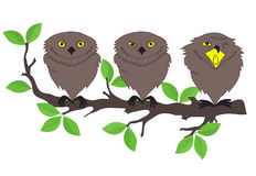 猫头鹰坐树枝 库存例证