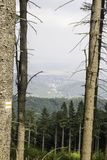 猫头鹰山Witcher在波兰 免版税库存照片